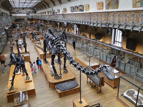 5mais_PARIS_Museu de Paleontologia