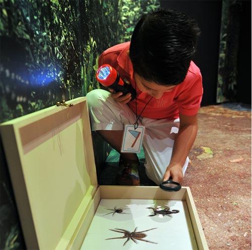 museu_da_vida - Exposição infantil Floresta dos Sentidos