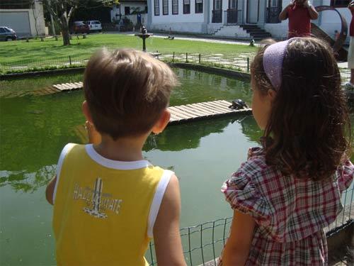 jardim botanico - lago das tartarugas